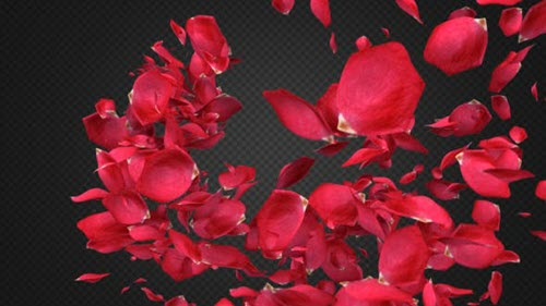 Rose Petal Transitions Pack - 21294817 - Motion Graphics (Videohive)