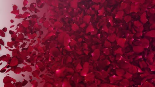 Petals Logo Reveal III - Project for After Effects (Videohive)