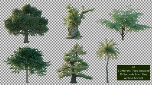 Tree Pack 4K - 26266867 - Motion Graphics Videohive